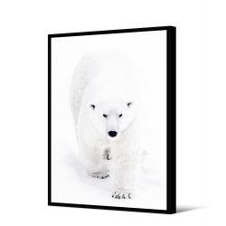 Toile encadré Ours blanc qui marche 80 x 120 cm, collection My gallery, Pôdevache
